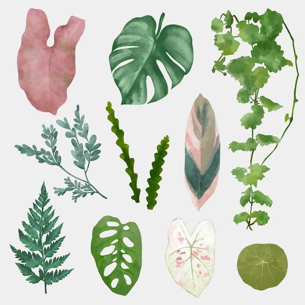 Zestaw elementów wektora liści roślin