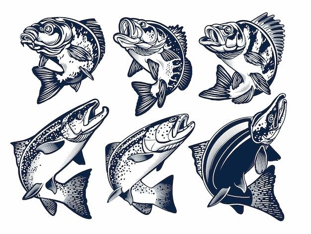 Zestaw emblematów ryb. karp, okoń, okoń, łosoś chinook, pstrąg tęczowy, łosoś sockeye. ilustracje.