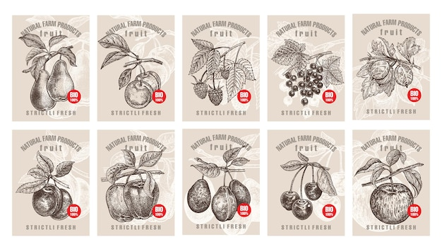 Zestaw etykiet z różnymi owocami i jagodami z napisami