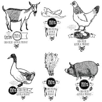Zestaw farm świeży produkt naturalny kurczak kaczka kaczka pig