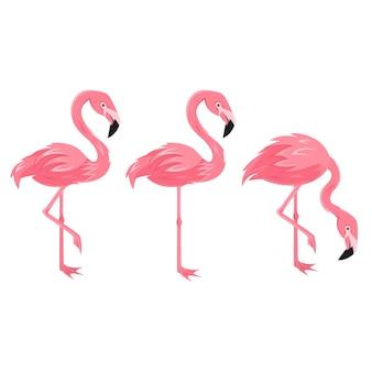 Zestaw flamingo na białym tle, egzotyczne ptaki tropikalne