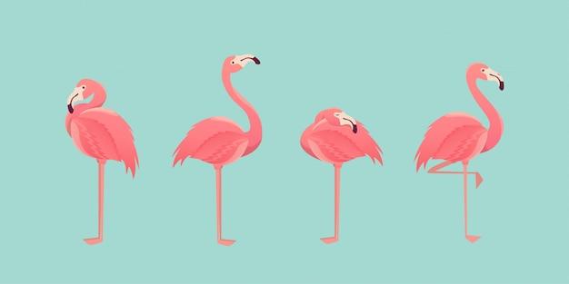 Zestaw flamingów na białym tle. ilustracja.