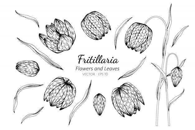 Zestaw fritillaria kwiat i liście rysunku ilustracji.