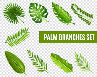 Zestaw gałęzi drzewa palmowego