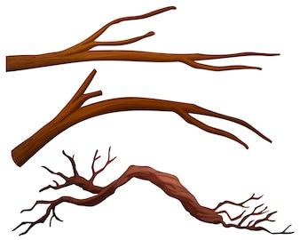 Zestaw gałęzi drzewa