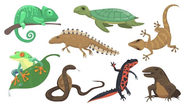 Zestaw gadów i płazów. żółw, jaszczurka, tryton, gekon na białym tle na tle gówna. ilustracja wektorowa dla zwierząt, przyrody, koncepcji fauny lasów deszczowych
