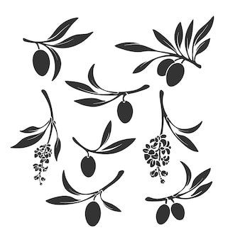 Zestaw gałązek oliwnych. czarna sylwetka owoców