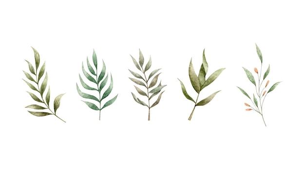 Zestaw gałęzi akwarela zielonych liści