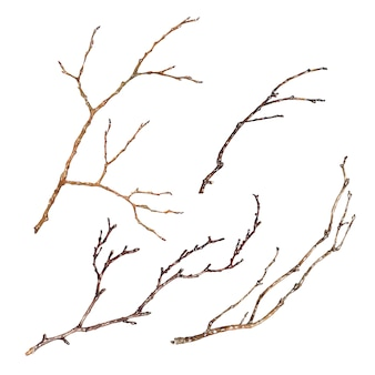 Zestaw gałęzi drzew na białym tle