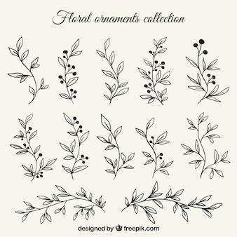 Zestaw gałęzi ręcznie rysowanych liści