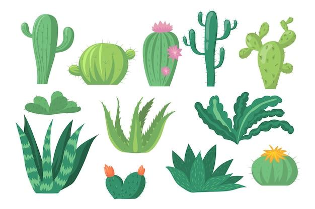 Zestaw gatunków kaktusów