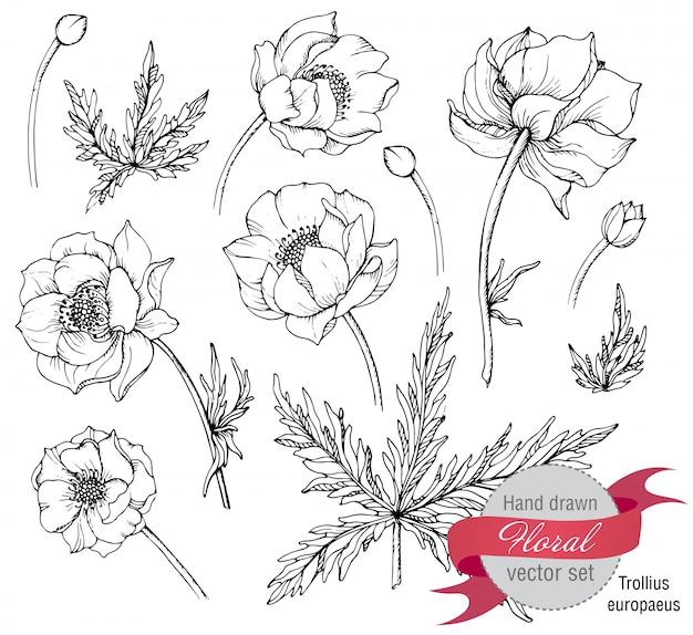Zestaw graficznych wiosennych kwiatów (trollius)