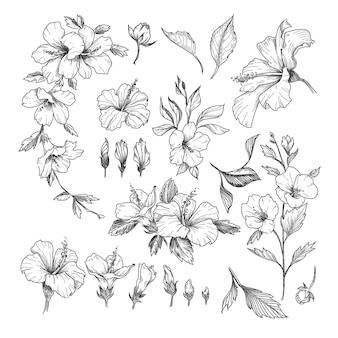 Zestaw grawerowanych ilustracji hibiskusa.