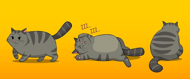 Zestaw grubych pasiastych kotów na białym tle, chodzący śpiący i pozujący z tyłu