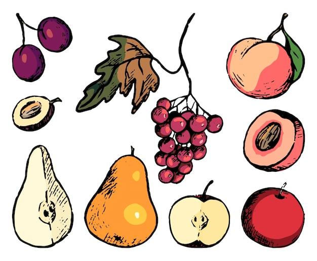 Zestaw gryzmoły jesienne owoce. proste wektor ręcznie rysowane ilustracje. kolekcja realistycznych rysunków na białym tle. kolorowe szkice tuszem do projektowania