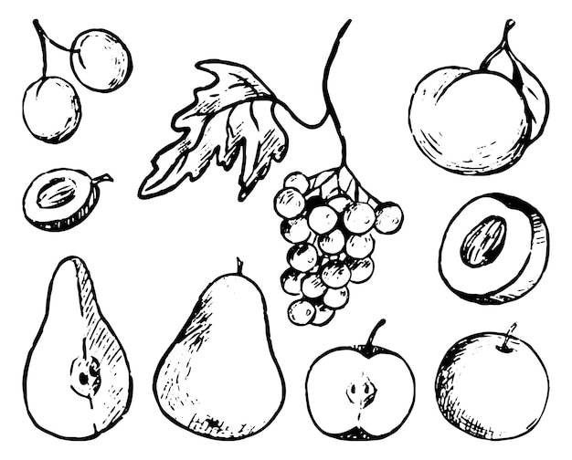 Zestaw gryzmoły jesienne owoce. proste wektor ręcznie rysowane ilustracje. kolekcja rysunków kontur na białym tle. monochromatyczne szkice atramentowe do projektowania