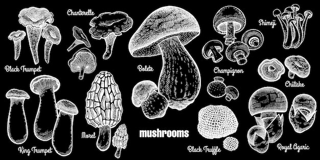 Zestaw grzybów.