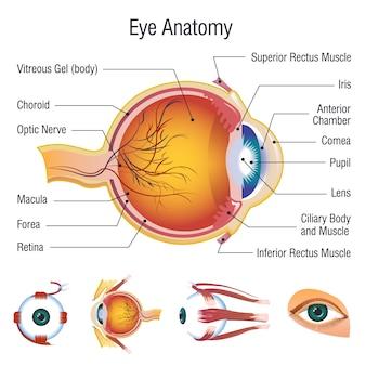 Zestaw ikon anatomii infographic gałki ocznej