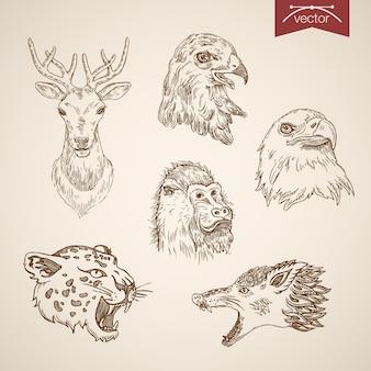 Zestaw ikon dzikich zwierząt. grawerowanie styl długopis ołówek kreskowanie kreskowanie papieru malowanie retro vintage lineart ilustracja.