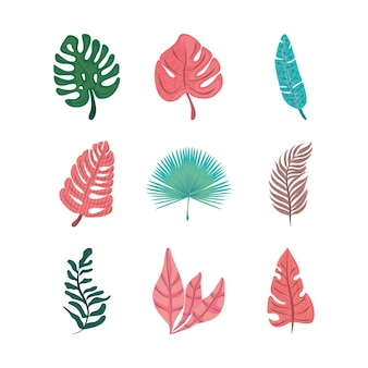 Zestaw ikon egzotycznej przyrody liści tropikalnych liści płaska konstrukcja
