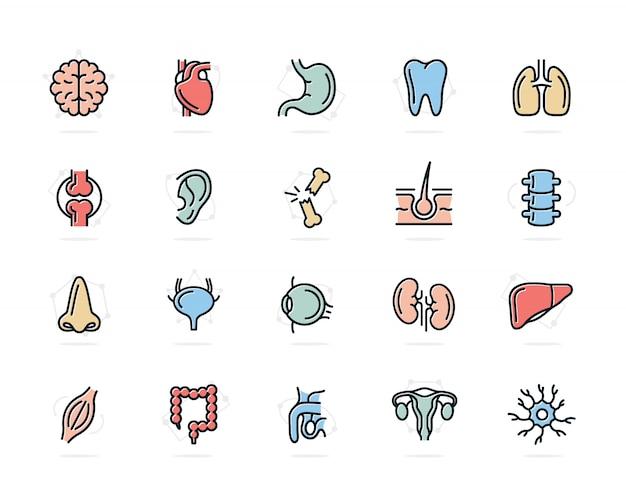 Zestaw ikon kolorowych linii narządów ludzkich. neuron, penis, macica, jelito i więcej.