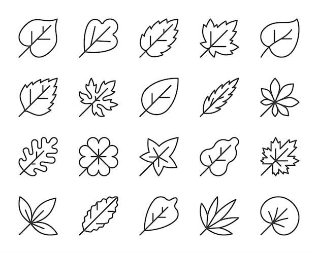 Zestaw ikon linii liści, prosty znak liści jesienią, klon, dąb, koniczyna, liście brzozy.