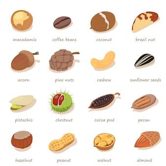 Zestaw ikon orzechów i nasion. izometryczna ilustracja 16nnuts i nasion wektorowe ikony dla sieci