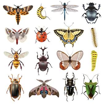 Zestaw ikon owadów