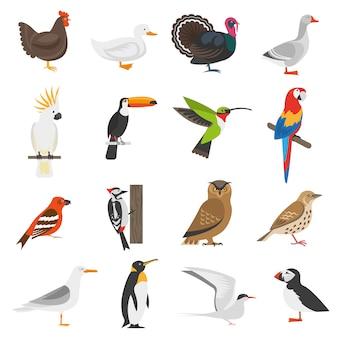 Zestaw ikon płaski kolor ptak
