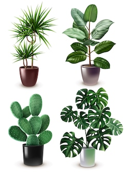 Zestaw ikon realistyczne roślina doniczkowa