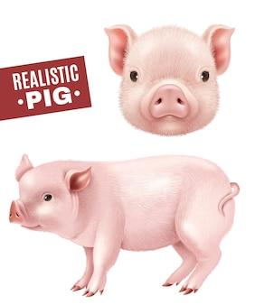 Zestaw ikon realistyczne świnia