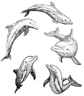 Zestaw ikon ręcznie rysowane tuszem delfinów