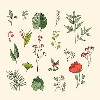 Zestaw ikon roślin i ziół. elementy do karty projektu lub zaproszenia