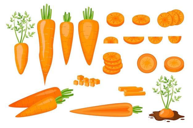 Zestaw ikon surowe marchewki pół, pokrojone w plastry, pokrojone w kostkę i pokrojone w paski i plastry. świeże organiczne i zdrowe warzywa wegetariańskie rosnące w glebie na białym tle. ilustracja kreskówka wektor