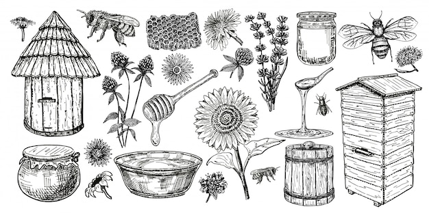 Zestaw ikon szkic pszczelarstwa. miód vintage zestaw z ula pszczoły, szklany słoik i łyżka, pszczoły, kwiaty miodnika. rysunek pasieki obiektów. ilustracja.