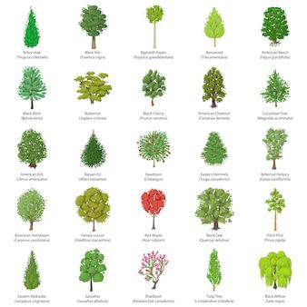 Zestaw ikon typów drzew. izometryczna ilustracja 25 rodzajów drzew wektorowe ikony dla sieci
