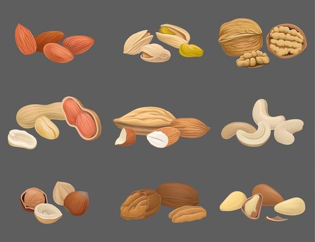 Zestaw ikon z różnych rodzajów orzechów, orzechów włoskich, pistacji, brazylii, migdałów, orzeszków ziemnych, orzechów nerkowca, orzechów laskowych i orzechów pekan. ekologiczna i zdrowa żywność. smaczna przekąska wegańskie jedzenie