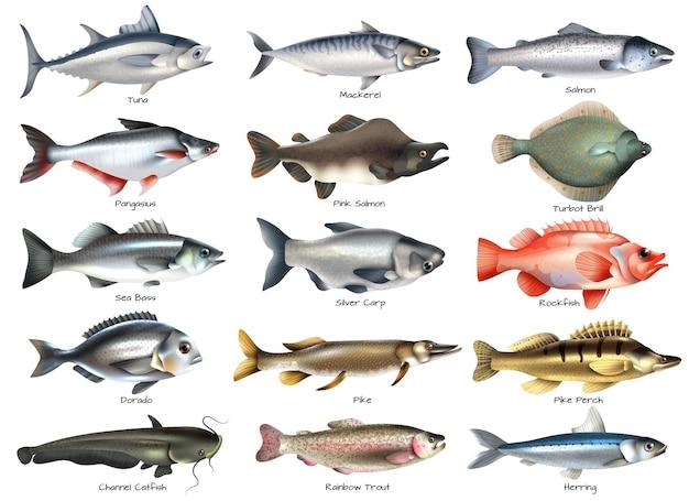 Zestaw ikon z ryb morskich i rzecznych z napisami na białym na białym tle