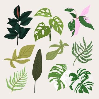 Zestaw ilustracji botanicznych roślin tropikalnych liści