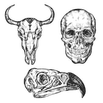 Zestaw ilustracji czaszki