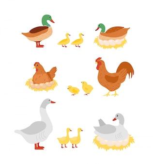 Zestaw ilustracji drobiu. kura, kogut, kaczka i gęś, kurczak na jajach na gniazdach w kreskówce.