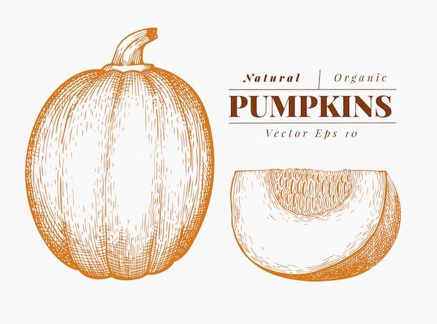 Zestaw ilustracji dyni. ręcznie rysowane ilustracji wektorowych warzyw. grawerowany styl halloween lub święto dziękczynienia