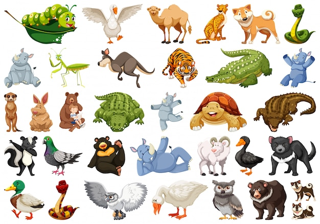 Zestaw ilustracji dzikich zwierząt