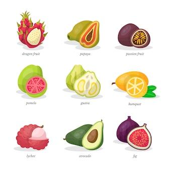 Zestaw ilustracji egzotycznych owoców