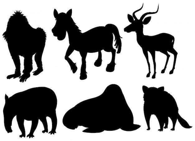 Zestaw ilustracji egzotycznych zwierząt