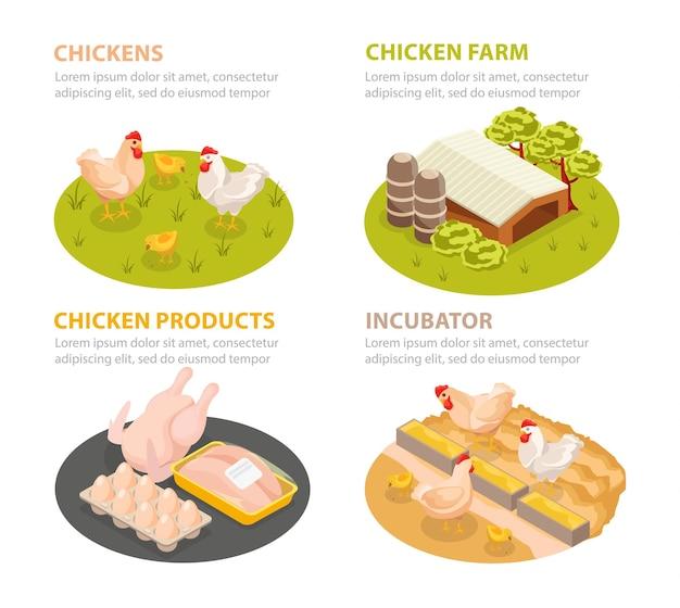 Zestaw ilustracji farmy kurczaka z kompozycjami koła ze scenami gospodarstwa drobiowego