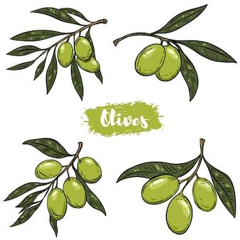 Zestaw ilustracji gałązki oliwnej. elementy plakatu, etykiety, godła, znaku,. ilustracja
