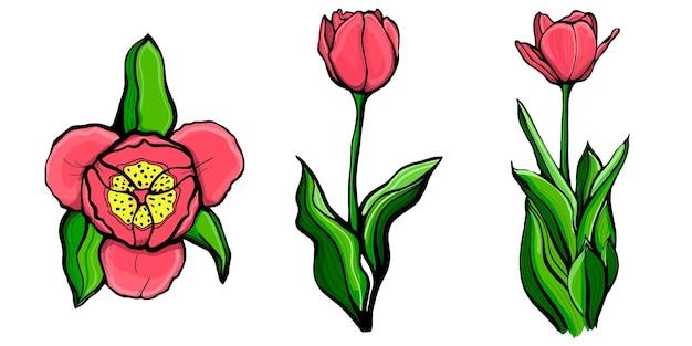 Zestaw ilustracji handdrawn czerwonych tulipanów