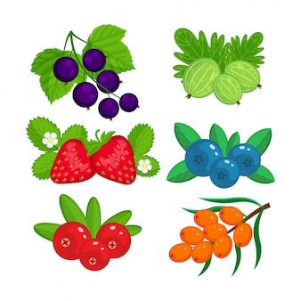 Zestaw ilustracji jagody ogrodowe na białym tle.