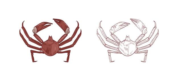 Zestaw ilustracji krabów morskich. kolorowe i monochromatyczne ręcznie rysowane skorupiaki na białym tle